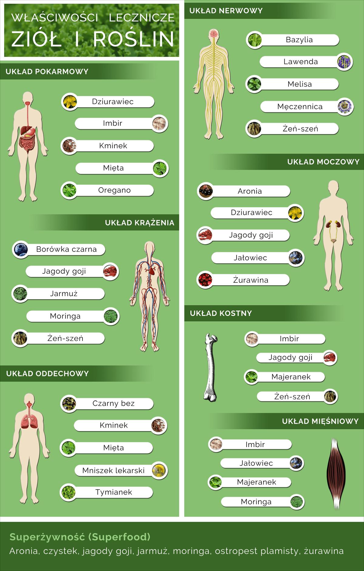 Właściwości lecznicze ziół infografika