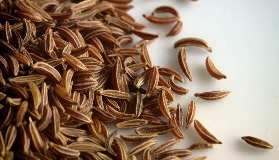 Kminek nasiona